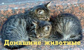Чем хороши кошки? Ода тем, от кого не дождёшься тапочек.