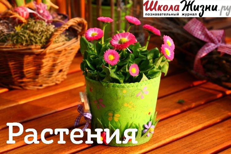 Надежда Руби Как продлить жизнь цветам? струна для срезки стекол jonnesway ab010013