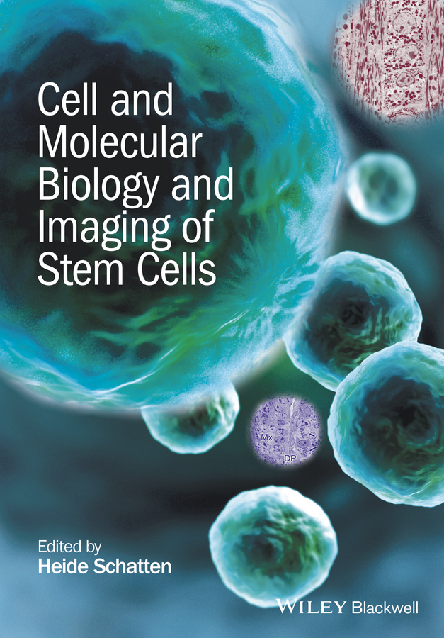 Heide Schatten Cell and Molecular Biology and Imaging of Stem Cells цена