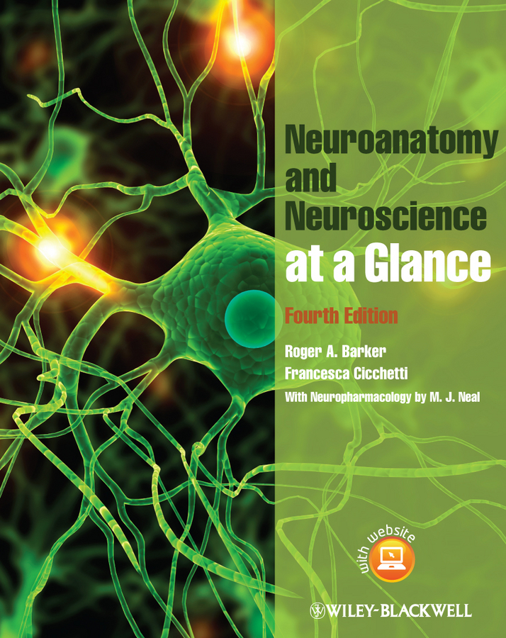 Barker Roger A. Neuroanatomy and Neuroscience at a Glance choudhury suparna critical neuroscience a handbook of the social and cultural contexts of neuroscience