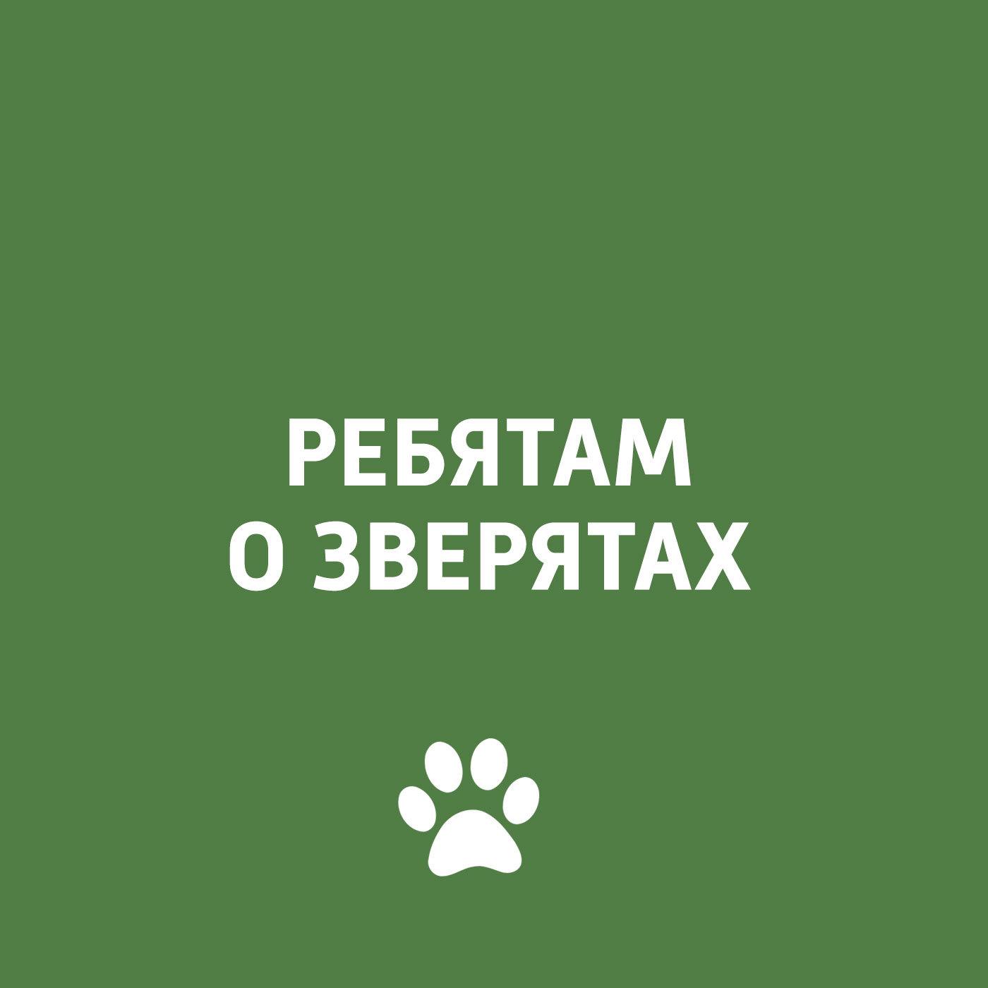 Творческий коллектив программы «Пора домой» Дикие кошки творческий коллектив программы пора домой вирусные заболевания у кошек и собак