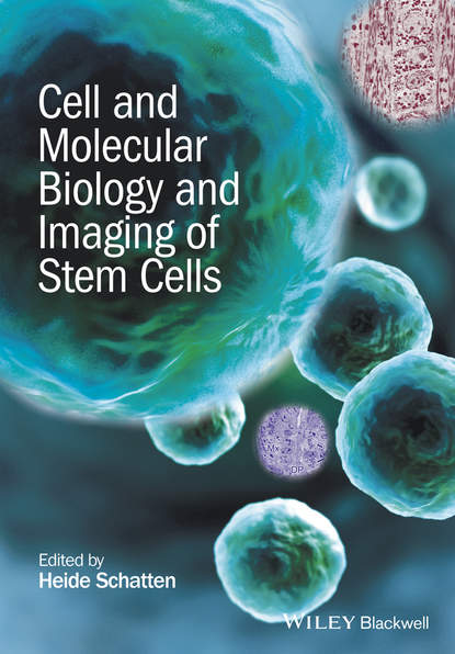 Heide Schatten Cell and Molecular Biology and Imaging of Stem Cells kursad turksen wound healing stem cells repair and restorations basic and clinical aspects