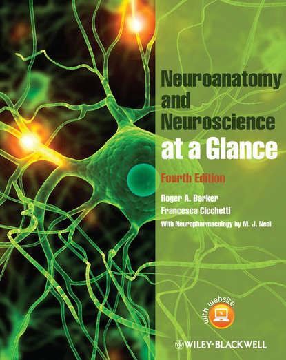 Barker Roger A. Neuroanatomy and Neuroscience at a Glance barker roger a neuroanatomy and neuroscience at a glance