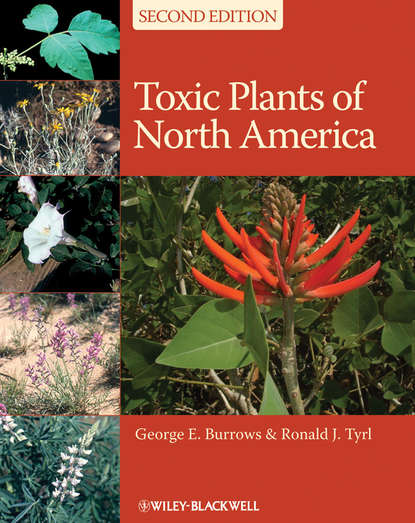 Фото - George E. Burrows Toxic Plants of North America julius e olson the story of north american discovery and exploration