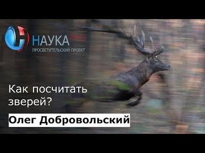 Олег Добровольский Как посчитать зверей?