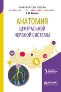 Анатомия центральной нервной системы. Учебное пособие для вузов
