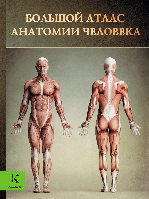Медицина анатомия человека в картинках